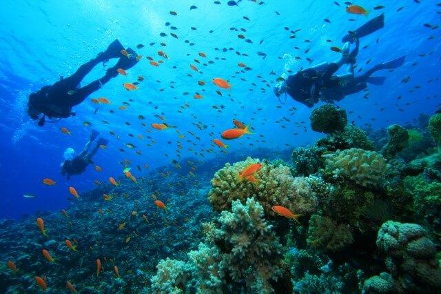 6 lectii din viata mea subacvatica